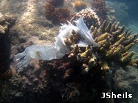 Marine debris is a threat to reef life