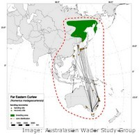Migration paths of the Eastern Curlew